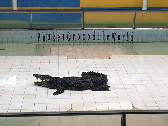 ‪Crocodile Farm and Sea Aquarium‬