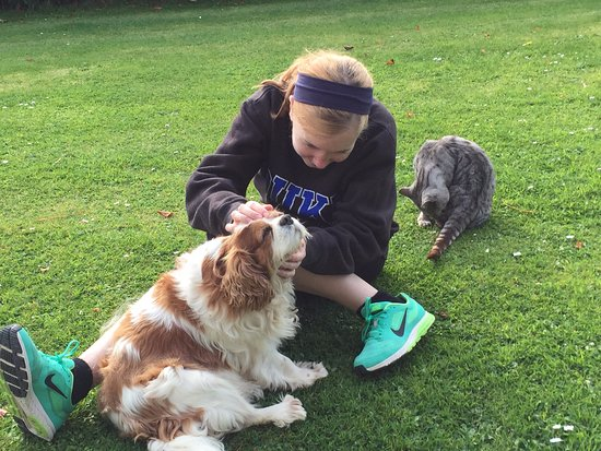 Ballydavid, Irland: My wife with their dog and cat in their front yard (October 2015)