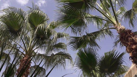 Riad Vert Marrakech: Magnifiques palmiers au centre du pation