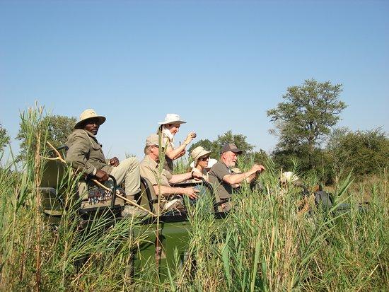 Kubu Safari Lodge: Off-road game drive in Klaserie Private Game Reserve