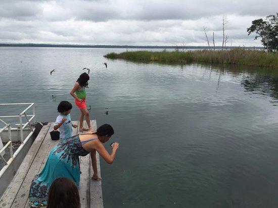 Camino Real Tikal: alimentando a los peces y tortugas