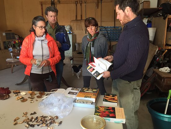 Creemore, Kanada: Mushrooms are sorted into types and identified by our Expert