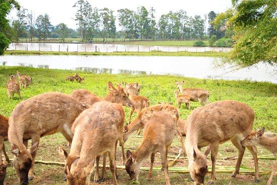 Pampas Safari