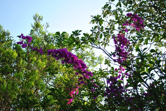 Gravatai, RS: Pampas Safari