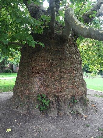 Westgate Gardens : Harika bir yer inanılmaz güzellikte ağaçlar bayıldım