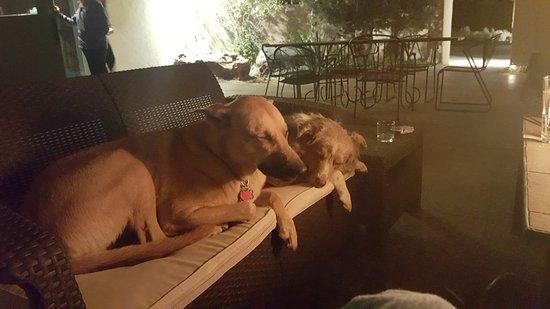 El Prado, NM: Patio is puppy friendly with consent.