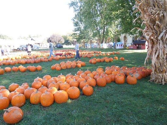 Rock Falls, Илинойс: lawn of pumpkins