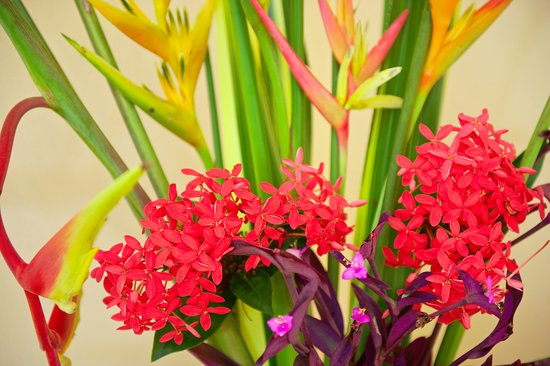 Punta Gorda, Belize: Freash flowers everywhere on the grounds and in the rooms to make you feel at Home