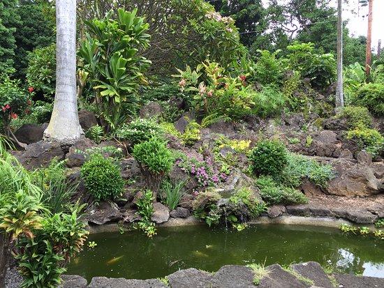 Naalehu, Hawaje: in the garden