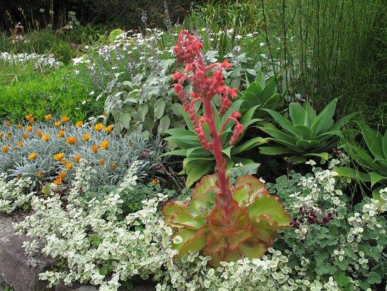 Poolewe, UK: Inverewe Garden