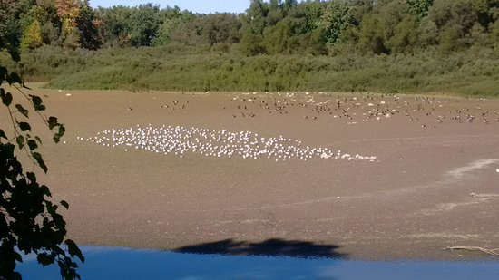 Elmira, Canada : Fall - water is low and seagulls are gathering
