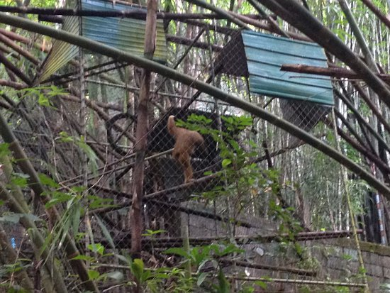 A great place to visit in Phuket - Picture of Gibbon ...
