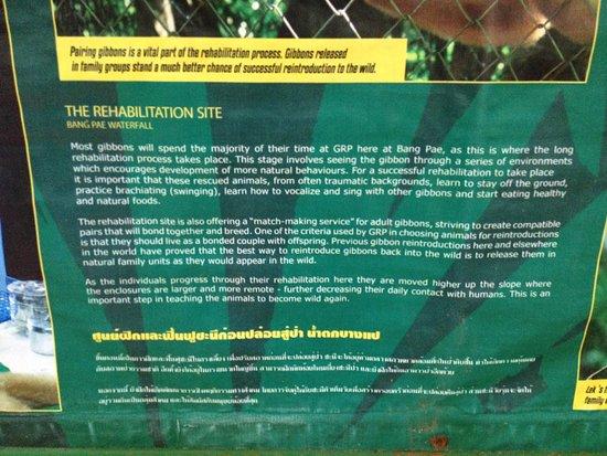 Gibbon Rehabilitation Project: A brilliant and sincere project.