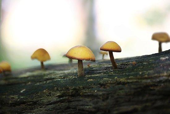 Blue Mountain Lake, estado de Nueva York: There were awesome mushrooms everwhere along the hike
