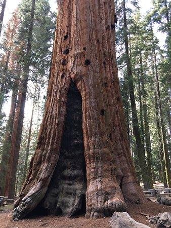 Three Rivers, Californië: Brandwunde