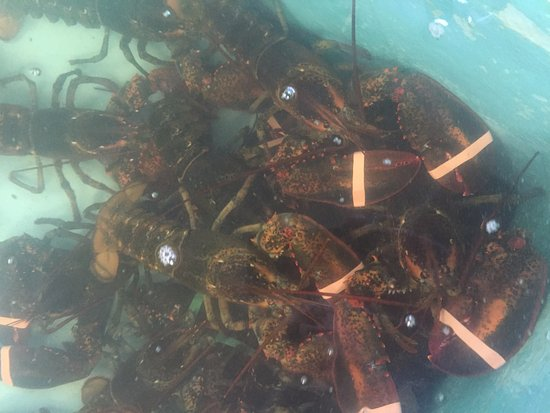 Wells Beach Lobster Pound : Some lobsters in one of the tanks