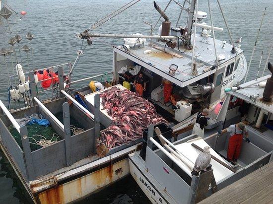 ชัตทัม, แมสซาชูเซตส์: Dogfish was the catch of the day.