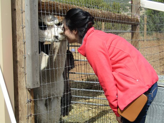 Sandia Park, NM: Nosey kisses
