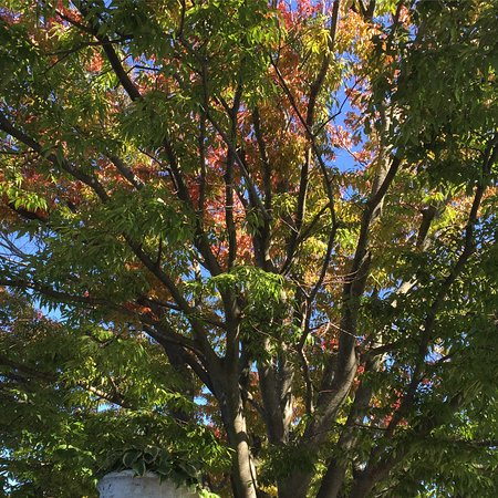 Babylon, NY: Trees are starting to turn.