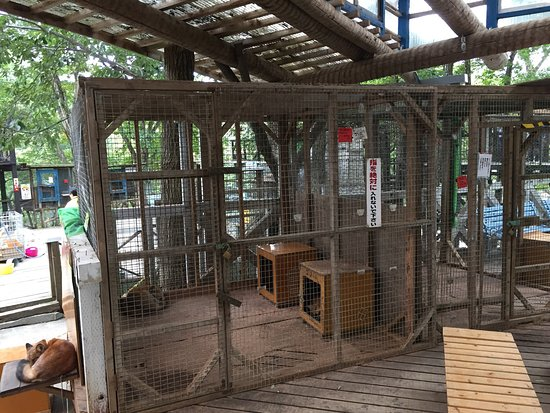Shiroishi, Japão: Expect to see foxs in tiny cages with cement floors.