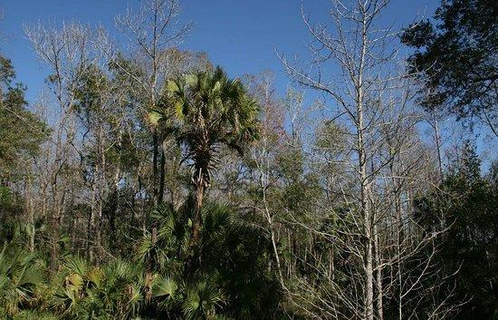 Wesley Chapel, Floryda: Nature Preserve Area