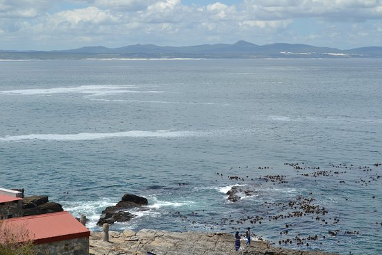 Херманус, Южная Африка: hermanus view