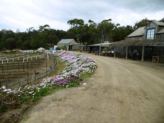 Swansea, Αυστραλία: Kate's Berry Farm