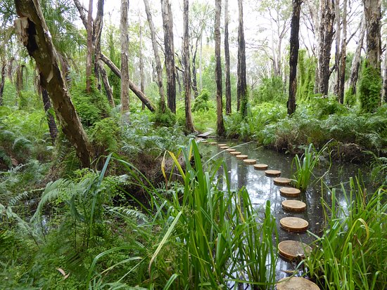 Agnes Water, Australia: The magical Paperbark Forest Boardwalk, also known as The Butterfly Walk