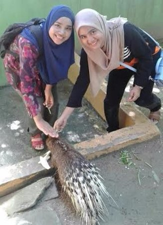 Langkawi Wildlife Park: Feeding Porcupine is always a must do when you are in the park