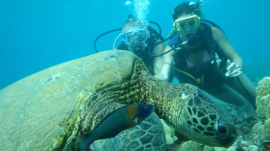 Ka'anapali, HI: Turtle2