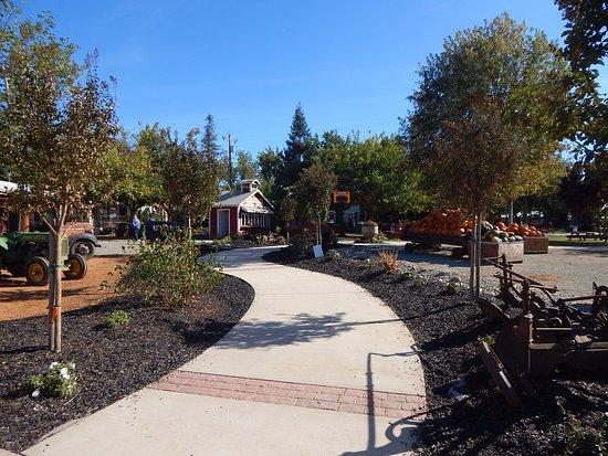 Wheatland, CA: Walking into the entrance of Bishop's Pumpkin Farm.
