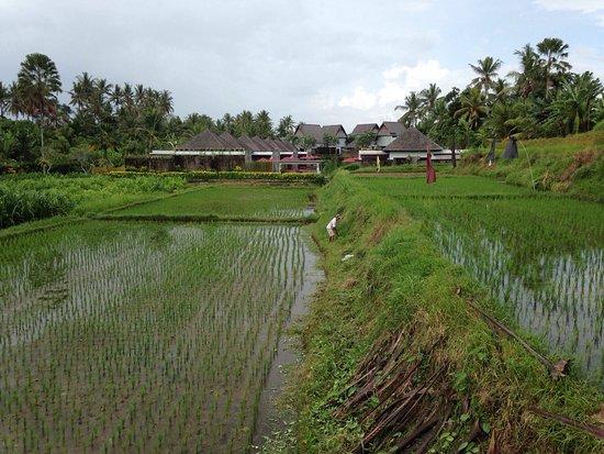 Furama Villas & Spa Ubud: photo2.jpg