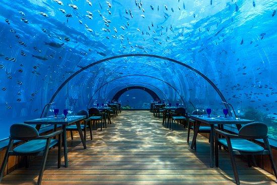 Lhaviyani Atoll: The 5.8 Undersea Restaurant