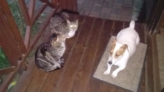 Sunset Lodge: Jack Russel and two of the cats
