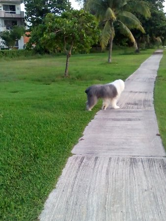 Cancun Golf Club at Pok-Ta-Pok : Doggy on the walk way!