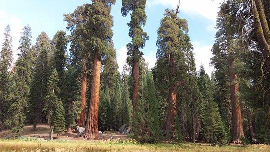 Three Rivers, CA: Kijk aandachtig, onderaan de middelste boom zie je enkele stippen... dat zijn wandelaars !!!