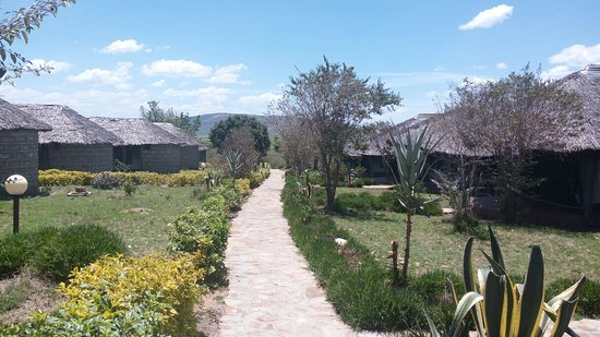 Masai Mara Manyatta Camp : Well defined footpath towards the tents