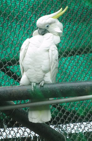 white cockatoo picture of national zoological park of delhi new