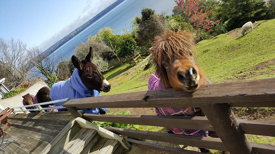 Peppers on the Point - Lake Rotorua: Cottage furry friends waiting for our return from our day's adventures