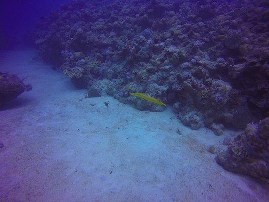 DiveSail Diving Pty Ltd: photo0.jpg