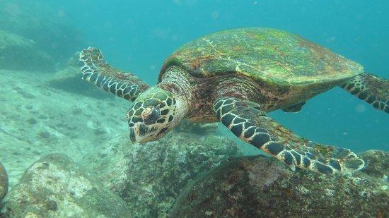 Chalong, Thailand: Belle tortue marine