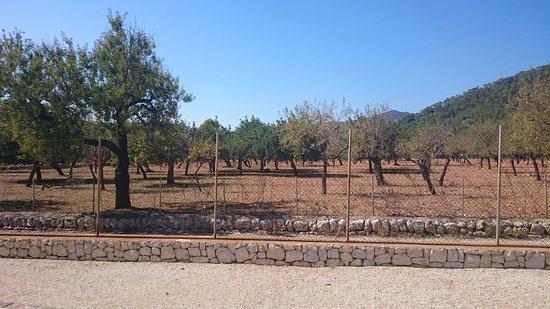 Caimari, España: DSC_1233_large.jpg