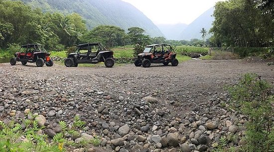 Honokaa, ฮาวาย: Ride our Open-Air Polaris ATV Buggy's on a working Kalo (taro) farm