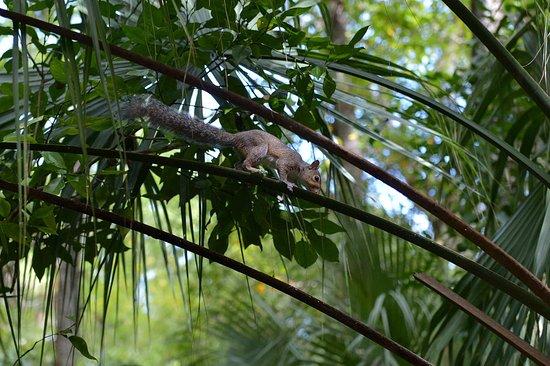 Sebring, Floryda: Egern var de største dyr vi så denne dag