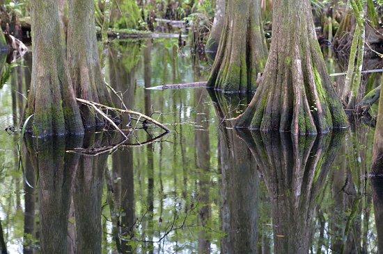 Sebring, Floryda: Vandspejlet