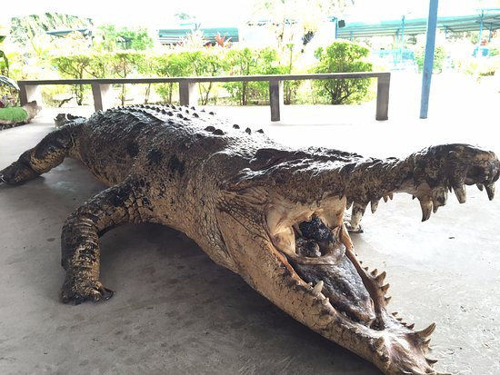 ‪Sandakan Crocodile Farm‬