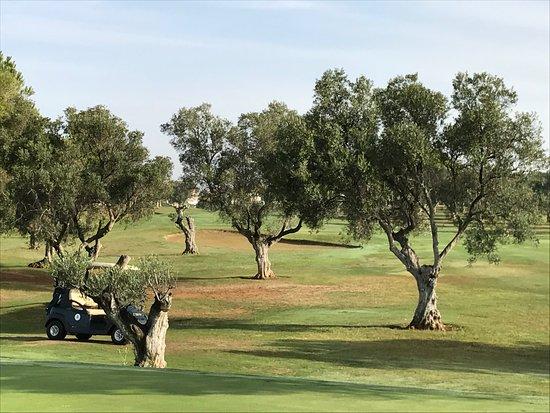Chiclana de la Frontera, Spain: Wunderschöne alte Olivenbäume