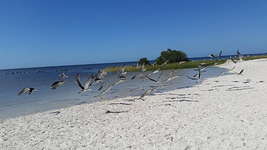 Fort Island Gulf Beach Picture Of