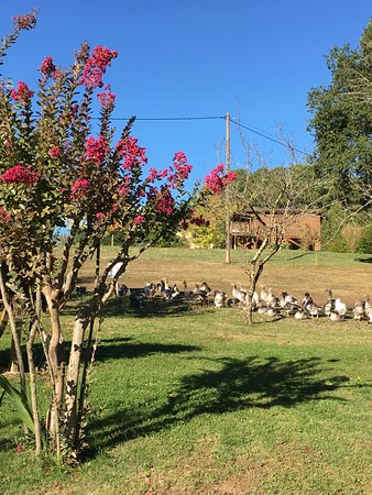 Marquay, France : гуси