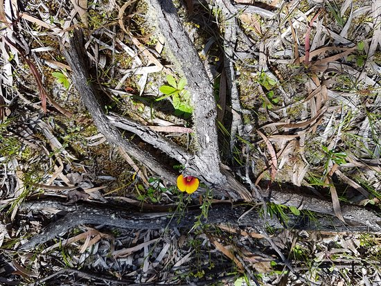 Pemberton, Avustralya: Wild flower on the tour